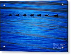 Getting Your Ducks In A Row Acrylic Print by Cynthia Lagoudakis