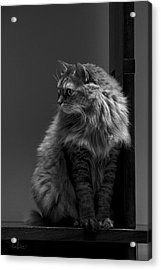 Ghiga Posing In Black And White Acrylic Print by Raffaella Lunelli