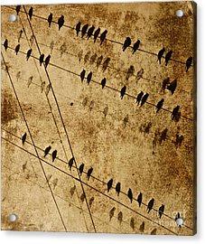 Ghost Birds On A Wire Acrylic Print by Deborah Talbot - Kostisin