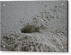 Acrylic Print featuring the photograph Ghost Crab by Debbie Cundy