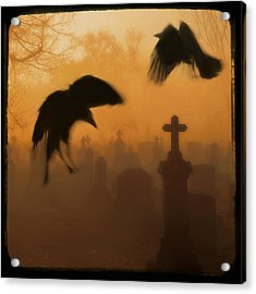 Ghost Crows 2 Acrylic Print by Gothicrow Images