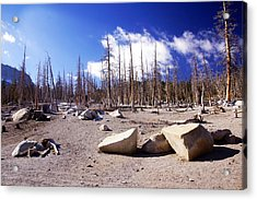 Ghost Forest 3 Acrylic Print by Michael Courtney