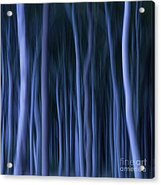 Ghost Forest Acrylic Print by Heiko Koehrer-Wagner