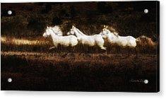 Ghost Horses Acrylic Print