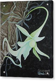Ghost Orchid On A Palm Tree Acrylic Print