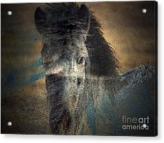 Ghost Pony Acrylic Print by Irma BACKELANT GALLERIES