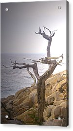 Ghost Tree Detail Acrylic Print by Barbara Snyder