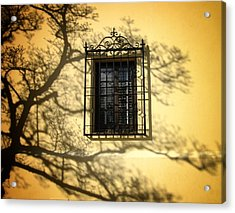 Ghost Tree Acrylic Print by Mary Ann Southern