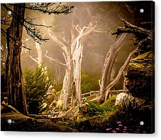 Ghost Tree Acrylic Print by TK Goforth