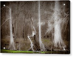 Ghost Trees Acrylic Print