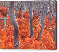 Ghosts Of Seasons Past Acrylic Print by Feva  Fotos