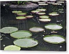 Acrylic Print featuring the photograph Giant Lily Pads by Shoal Hollingsworth