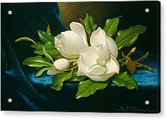 Giant Magnolias On A Blue Velvet Cloth Acrylic Print by Martin Johnson Heade