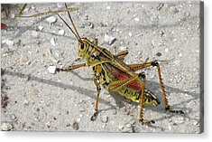 Acrylic Print featuring the photograph Giant Orange Grasshopper by Ron Davidson