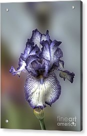 Giant Purple Iris Acrylic Print by Deborah Smolinske