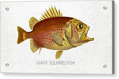 Giant Squirrelfish Acrylic Print by Aged Pixel