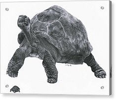 Giant Tortoise Acrylic Print by Lucy D