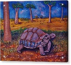Giant Tortoise Acrylic Print by Richard Goohs