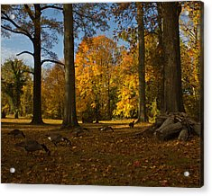 Acrylic Print featuring the photograph Giant Trees And Ducks Feeding by Jose Oquendo