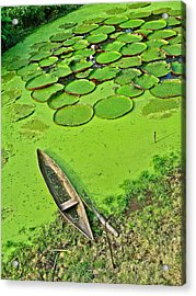 Giant Water Lilies And A Dugout Canoe In Amazon Jungle-peru Acrylic Print by Ruth Hager