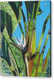 Giant White Bird Of Paradise Acrylic Print