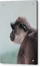 Acrylic Print featuring the photograph Gibbon Monkey Profile Portrait by Tracie Kaska