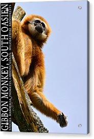 Gibbon Monkey  Acrylic Print by Tommytechno Sweden
