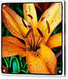 Gift From #mom #orange #lily #rainyday Acrylic Print