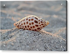 Gift From The Sea Acrylic Print by Melanie Moraga