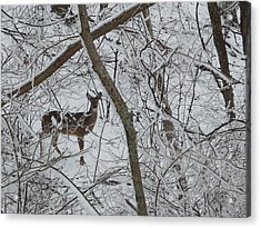 Gift In The Woods Acrylic Print