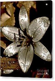 Gilded  Lilies 2 Acrylic Print by Linda Bianic