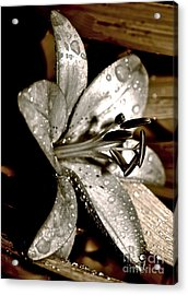 Gilded Lilies 3 Acrylic Print