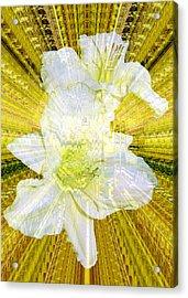Gilding The Daylilies Acrylic Print by Susan Elizabeth Dalton