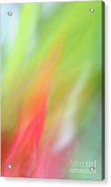 Ginger Flower Abstract 2 Acrylic Print