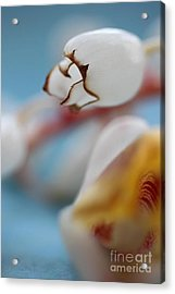 Ginger Flower Acrylic Print by AR Annahita