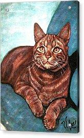 Ginger Tabby Acrylic Print