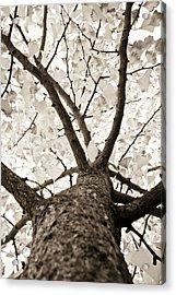 Ginkgo Acrylic Print by Frank Tschakert
