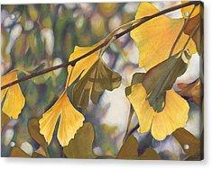 Ginkgo Gold Acrylic Print by Sandy  Haight