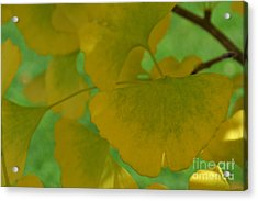 Ginkgo Leaves Abstract Acrylic Print
