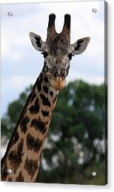 Giraffe  Acrylic Print by Aidan Moran