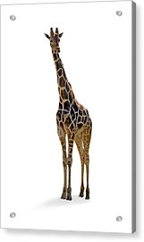 Acrylic Print featuring the photograph Giraffe by Charles Beeler