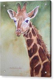 Giraffe Acrylic Print by Cynthia Roudebush