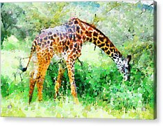 Giraffe Eating Grass Painting Acrylic Print by George Fedin and Magomed Magomedagaev
