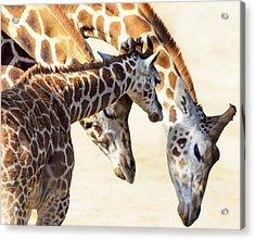 Giraffe Family Acrylic Print by Camille Lopez
