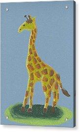 Giraffe Gazing Acrylic Print by Fred Hanna