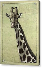 Giraffe Acrylic Print by James W Johnson