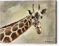 Giraffe Acrylic Print by Linda Blair