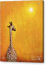 Giraffe Looking Back Acrylic Print