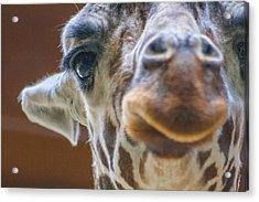 Giraffe Portrait Acrylic Print