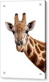 Giraffe Portrait Acrylic Print by Johan Swanepoel